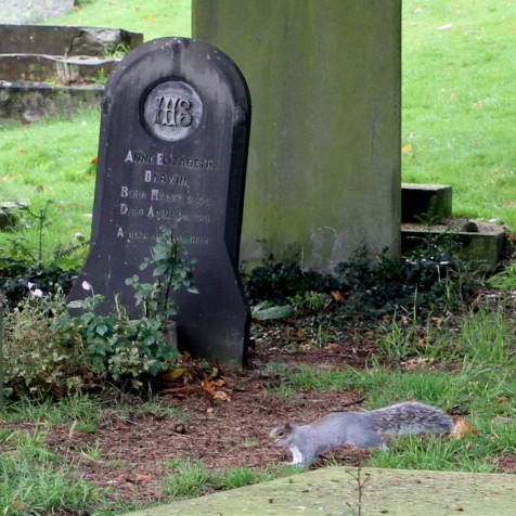 Anne Darwin's Grave at Malvern Priory (Photo:Tim Jones)