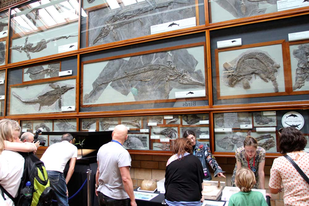 Fossil Marine Reptiles ©Tim Jones