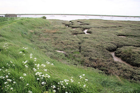 Final resting place of the Beagle?  Cutting in the Paglesham shore (photo Tim Jones)