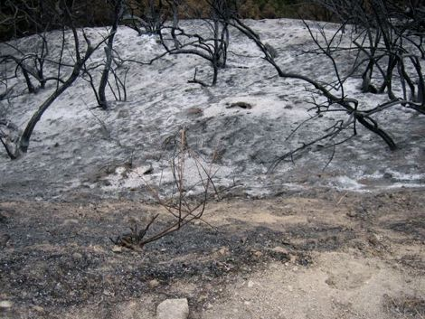 Scorched Earth in the San Gabriel Mountains