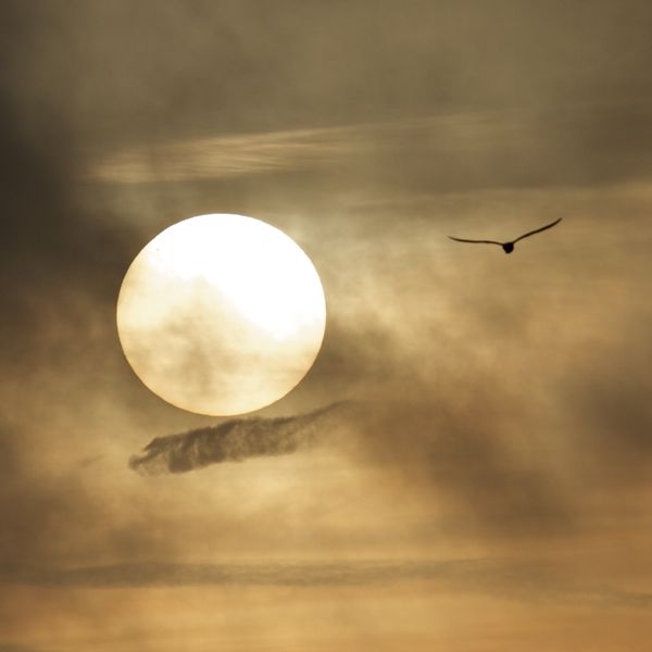 Winter sun with sunspot and seagull