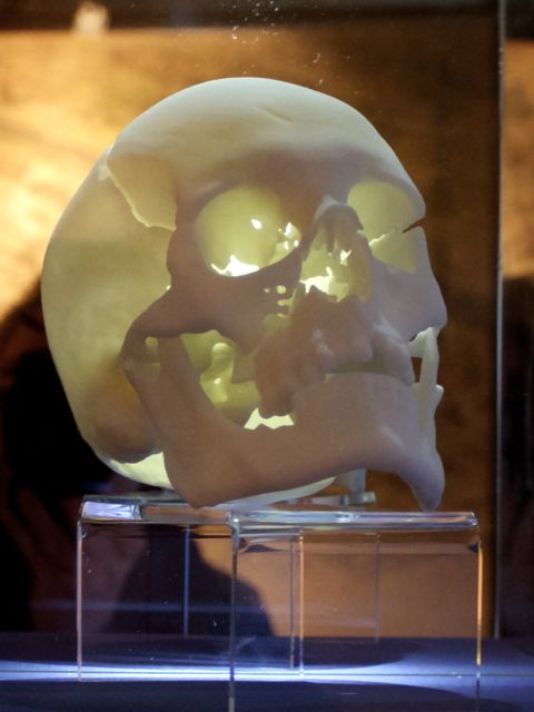 Model of Richard III's Skull at the Leicester Guildhall(Photo: Tim Jones)