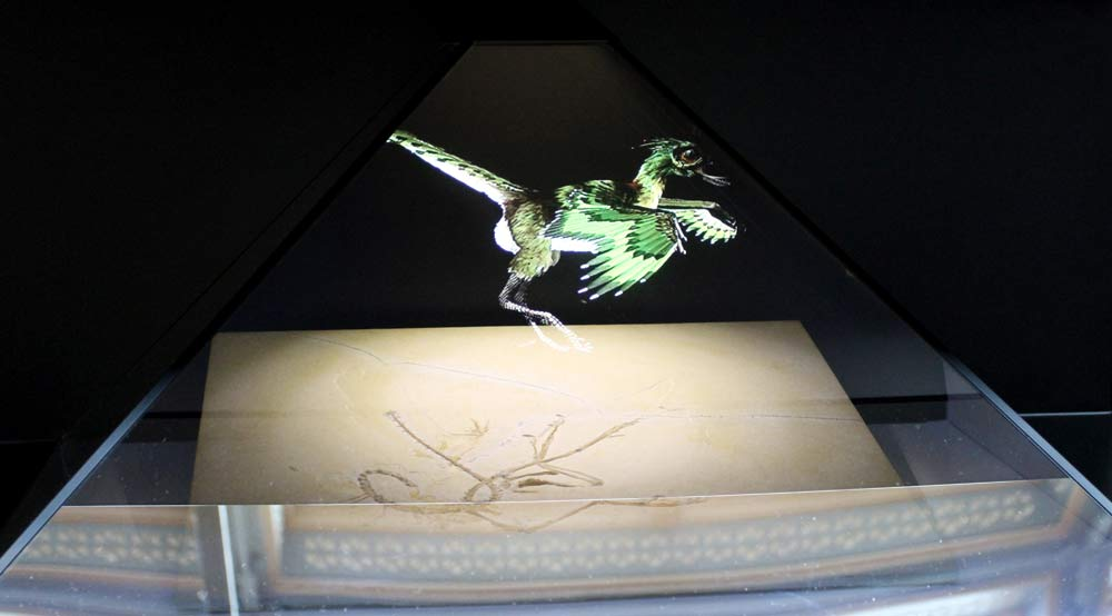 Archaeopteryx fossil and hologram ©Tim Jones